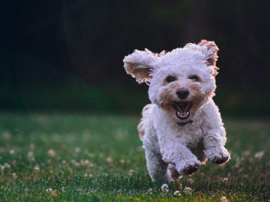 Find den rette dyrlæge til dit nye familie dyr